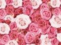 プロポーズ用の花束をプレゼント!おすすめ本数は一輪と108本で意味は?
